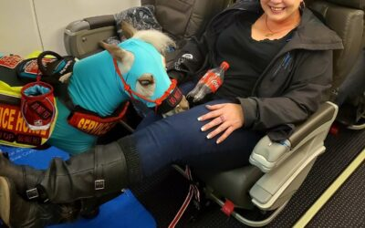 American Airlines Gives A Tiny Horse The First Class Treatment